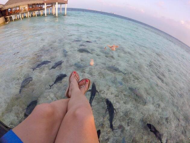 Otel ziyaretine gelen köpek balıkları: Maldivler