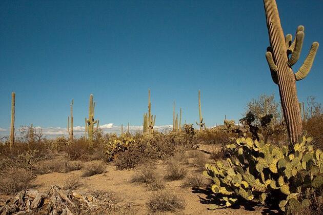 ABD'nin büyülü eyaleti New Mexico'nun büyük şehri: Albuquerque