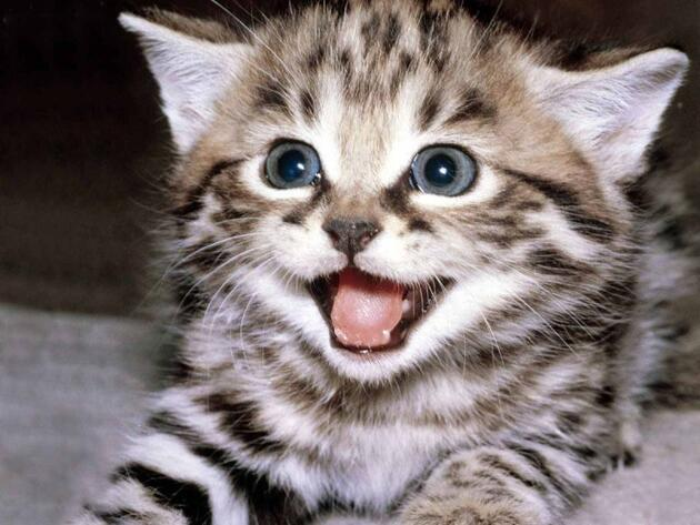 Arastirma Kediler 9 Bin Yildir Insanlarla Yasiyorlar