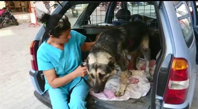 Muğla'da arabanın arkasına bağlanan köpeği hayvanseverler kurtardı