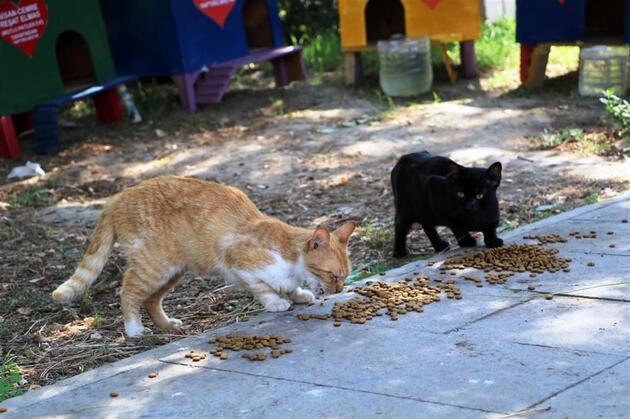 İzmir'in turizm elçisi kedilerini Aras koruyor