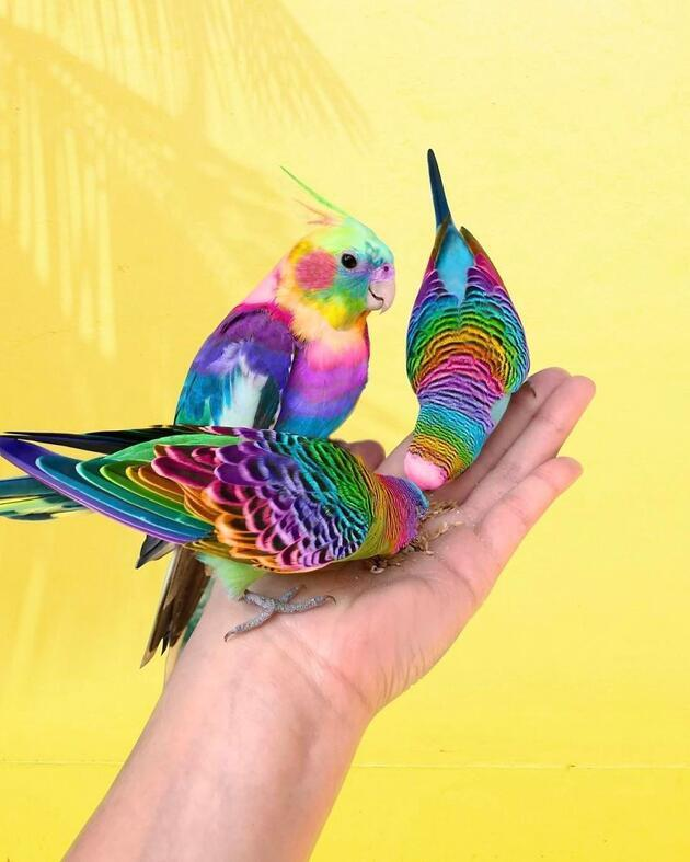 Onun sanatı gökkuşağının her rengini yansıtıyor