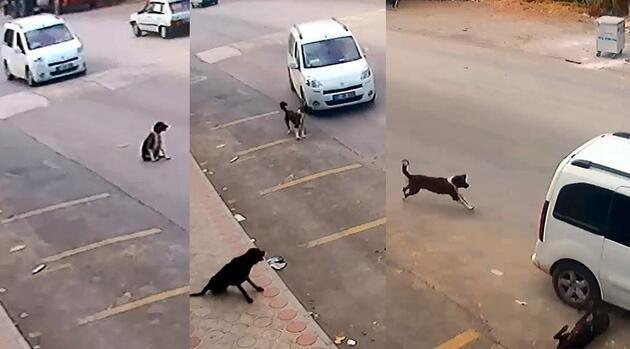 O, sokak hayvanlarının Robin Hood'u