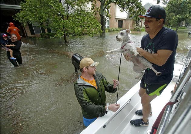 ABD'de Harvey Kasırgası hayvanları da vurdu