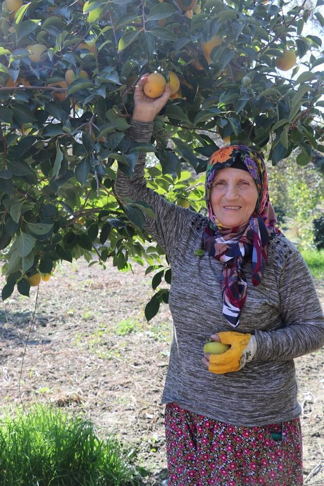 'Cennet elması', üreticinin yüzünü güldürüyor