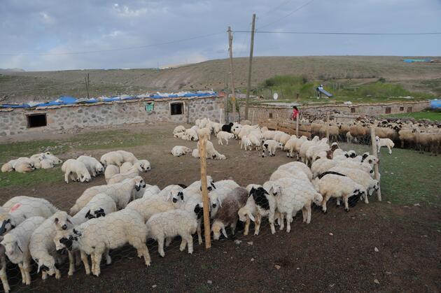 Tunceli'de 6 bin lira maaşla çalışacak çoban bulunamıyor