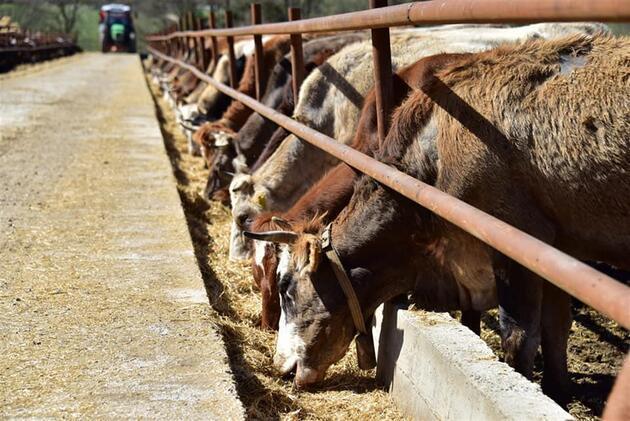Belediye Başkanı'ndan çiftlik sahiplerine destek mesajı
