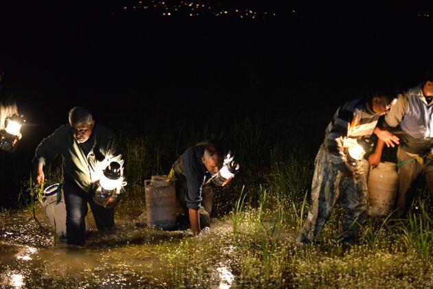 Kayseri'de yakalanan kurbağalar Avrupa'ya ihraç ediliyor