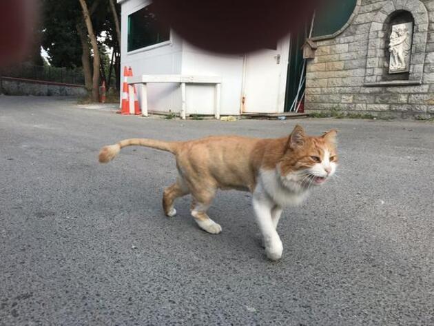 Adnan Oktar'ın 'aslan' kedisi sokakta kaldı