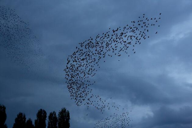 Onlarca kuştan gökyüzünde dans