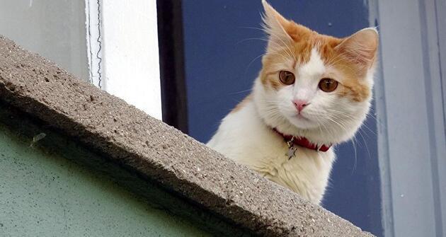 Avustralya, 2 milyona yakın başıboş kediyi öldürmek için havadan zehirli sosis atıyor