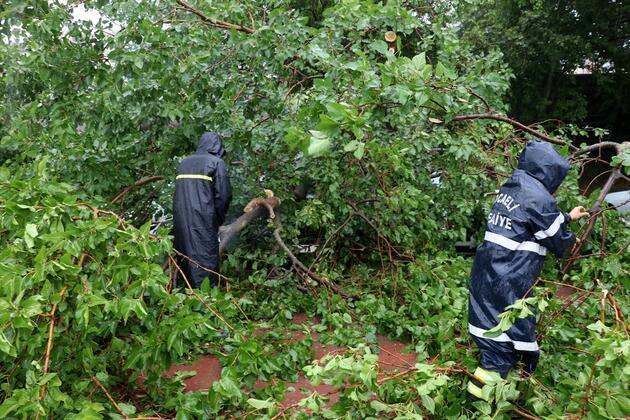 Kocaeli'de şiddetli sağanak! Ağaç araçların üzerine devrildi