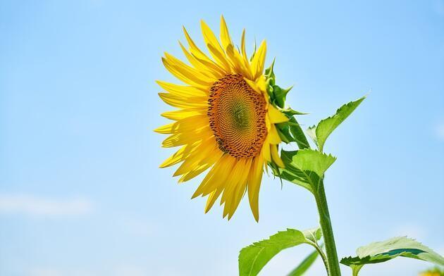 Hafızayı güçlendiriyor, bunamayı engelliyor, mutluluk veriyor! İşte o besinler