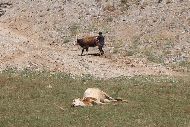 Hayvanları teker teker yere düştü... ''Böyle bir şeye bugüne kadar rastlamadık'' dedi