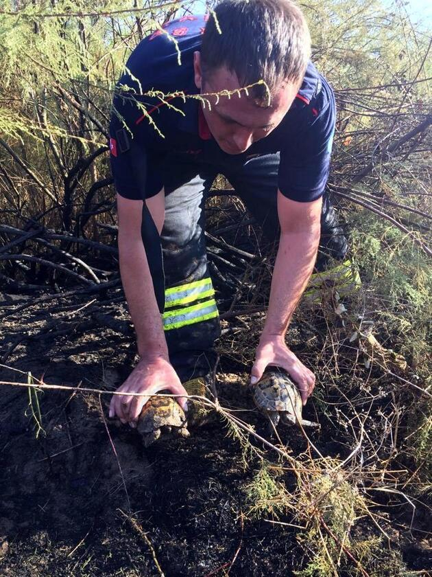 Çok yaşa kahraman! Kaplunbağaları yangından kurtardı