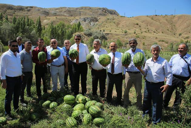 'Yetişmez' denilen Sivas'ta, 150 ton karpuz hasadı