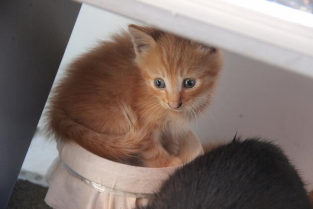Rusya'da selde mahsur kalan kediler böyle kurtarıldı