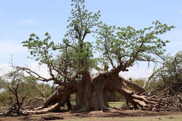 Senegal'in vahşi yaşam parkı: Bandia Rezervi