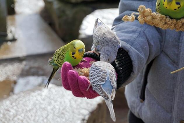 Uzmanlar uyardı: 'Beslediğiniz kuş katiliniz olabilir'