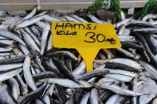 İklim değişikliği türlerini azalttı: Denizlerimizde balık kalmadı