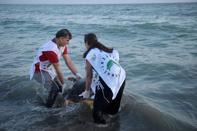 Tedavi edilen caretta carettalar denizle buluştu