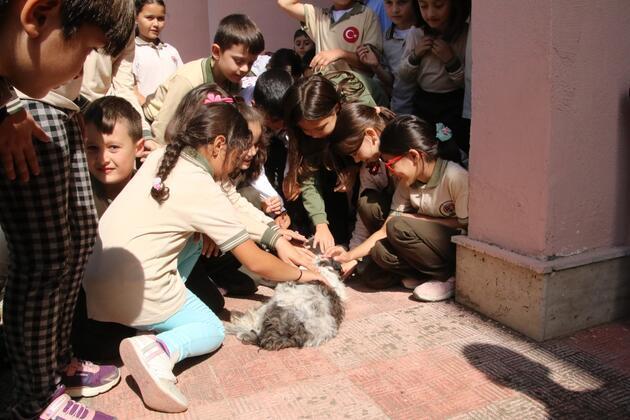 Okul müdürü sokak köpeklerini sahiplendi
