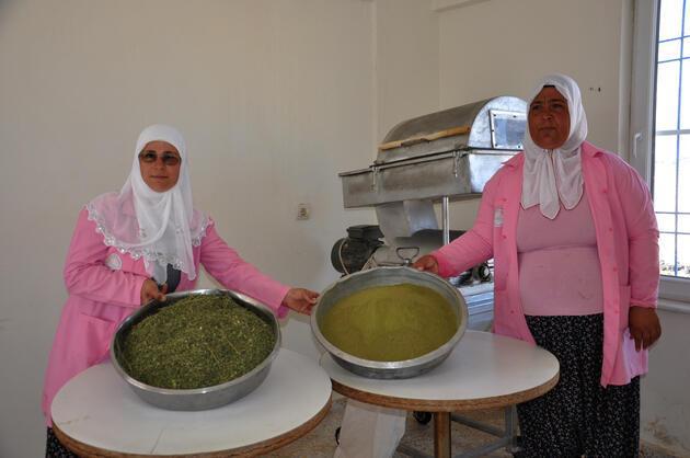 300'den fazla hastalığa iyi geliyor... 'Moringa çayıyla 3 ayda 24 kilo verdim'