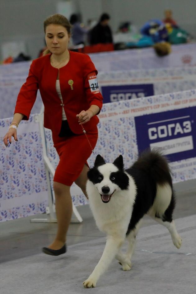 34 ülkeden 9 binden fazla köpek katıldı! Kıyasıya yarıştılar