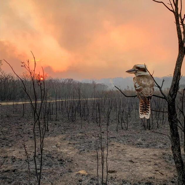 Avustralya'daki yangın faciası sürüyor: 4 kişi öldü, yüzlerce kişi evlerinden oldu