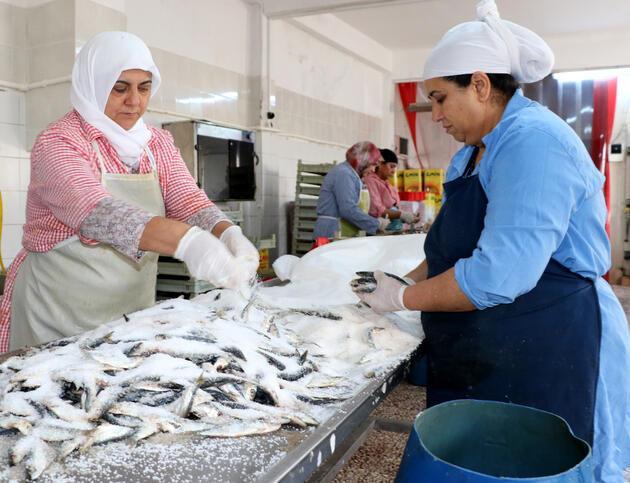 Gelibolu'da Rumlardan kalma 200 yıllık lezzet; tuzlu balık