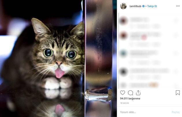 İnternet fenomeni kedi Lil Bub öldü