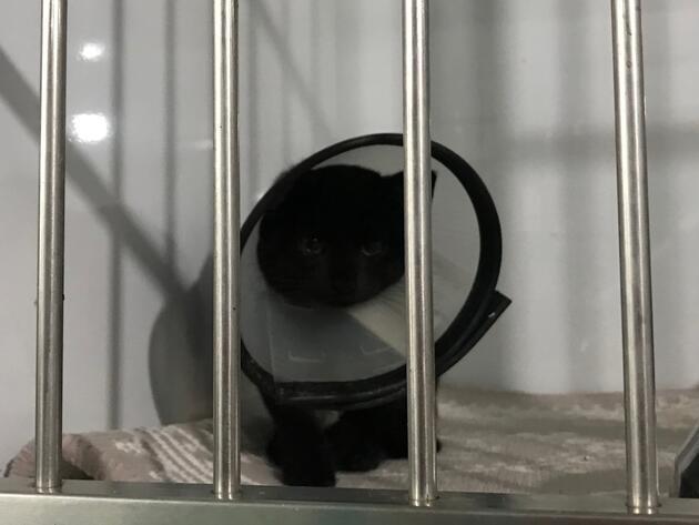 Lüks sitedeki kedi ölümleri hayvanseverleri ayağa kaldırdı