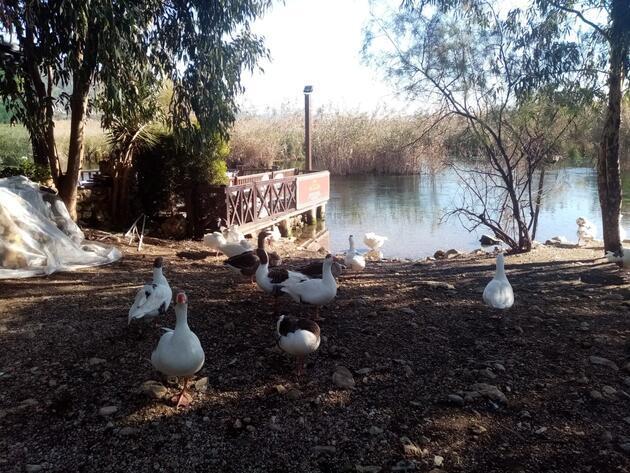 Akyaka Azmağı kaz ve ördeklere kaldı