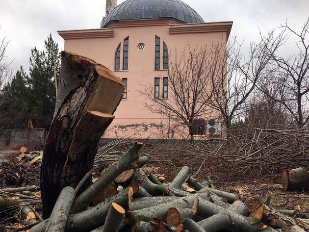 Tayini çıkan imamın, cami bahçesindeki ağaçları kestiği iddiası