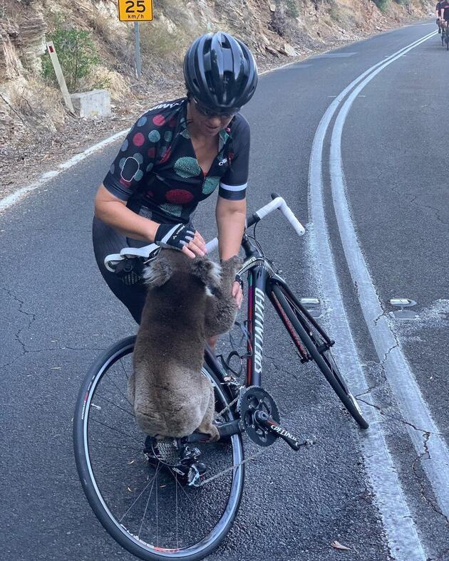 Koalanın yardımına bisikletçiler yetişti
