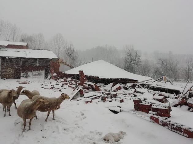 Ahırın çatısı çöktü, koyunlar telef oldu