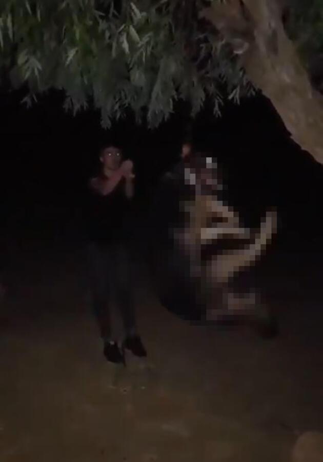 Alman kurdunu ağaca asarak öldürdü