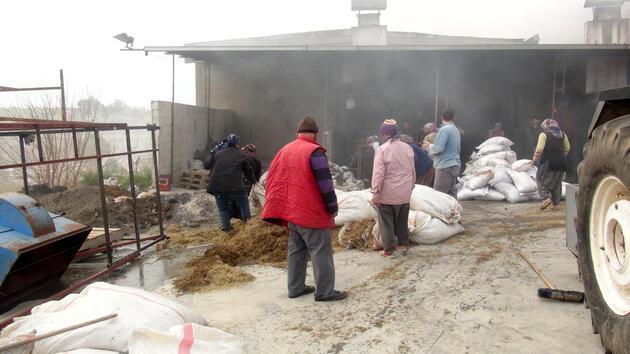 Defne yaprağı işleme fabrikasında yangın