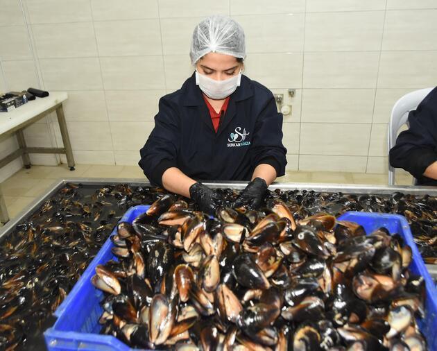 Yılda yaklaşık 1 milyon ton tüketiliyor! Denizden sofraya midyenin yolculuğu