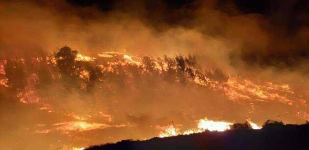 Adana'da orman yangını! İki farklı alanda çıktı