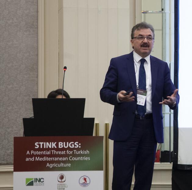 Karadeniz'de 1 milyar dolar 'kahverengi kokarca'  zararı
