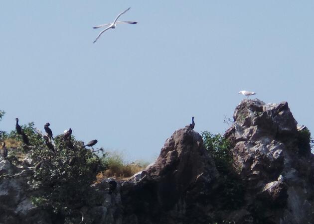 Hoynat Adası'na ziyaretçi akını