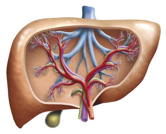 Karaciğer yağlanmasını önlemek için mutlaka tüketin!
