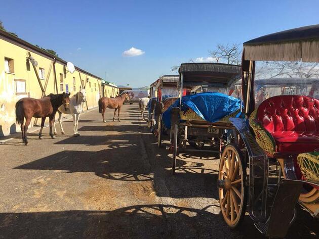 İBB, Adalar'da at ve faytonları satın almaya başladı