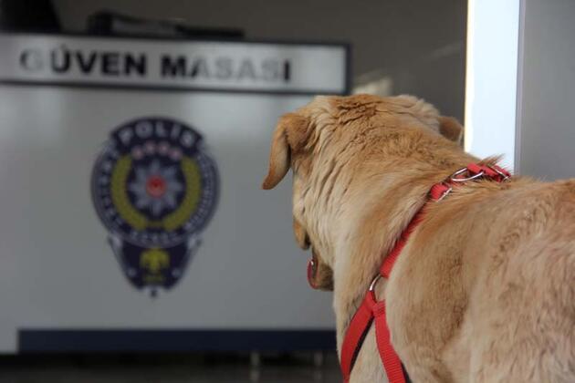 Kaybolan köpek polis karakoluna sığındı