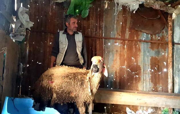 Yangında koyunları telef oldu