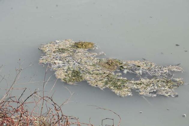Teke Deresi kirlilikten beyaz ve gri renkte akıyor