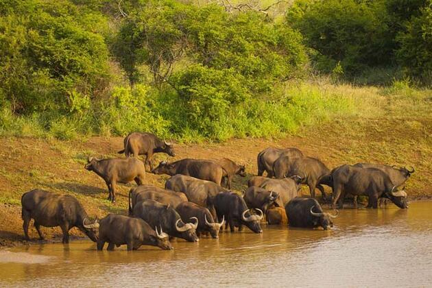 Fotoğrafçıların Güney Afrika'daki tehlikeli yolculuğu