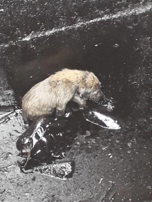 Petrol kuyusundan kurtarılan köpeğe köy sakinleri sahip çıktı