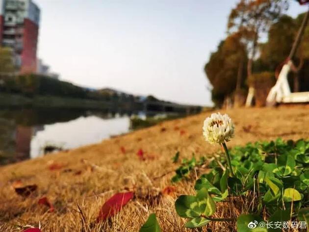Huawei P40 Pro ile çekildiği iddia edilen fotoğraflar sızdı